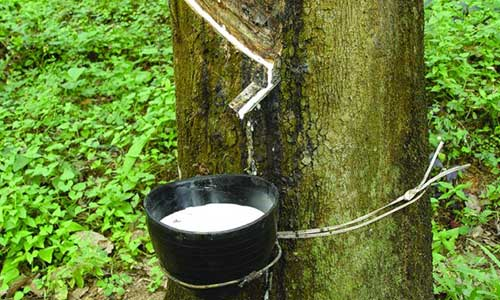 Continuing natural rubber price rebound in 2017