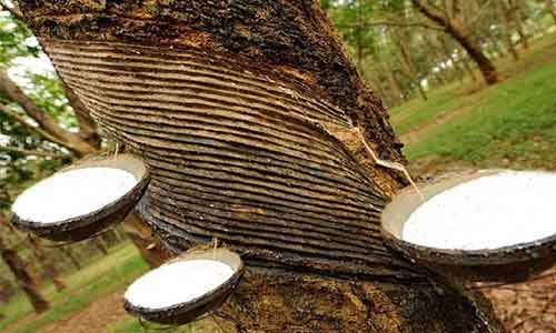 ANRPC expects growth in global natural rubber demand